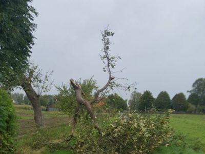 Sturmschäden (08-2017)